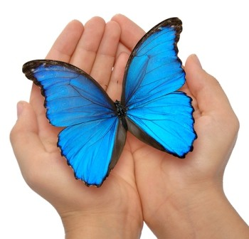 Blue Butterfly - x-small